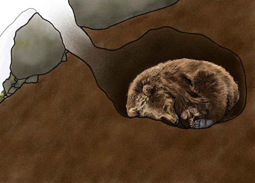 bear-in-den-illustration