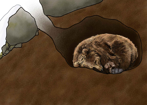 bear-in-den-illustration